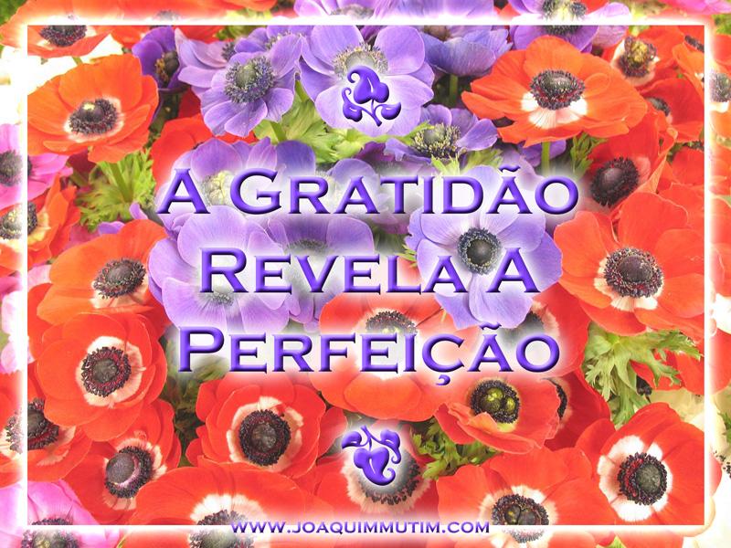 a gratidão revela a perfeição
