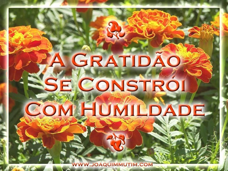 a gratidão se constrói com humildade