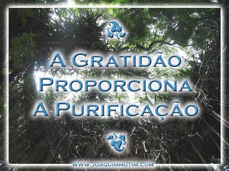 a gratidão proporciona a purificação