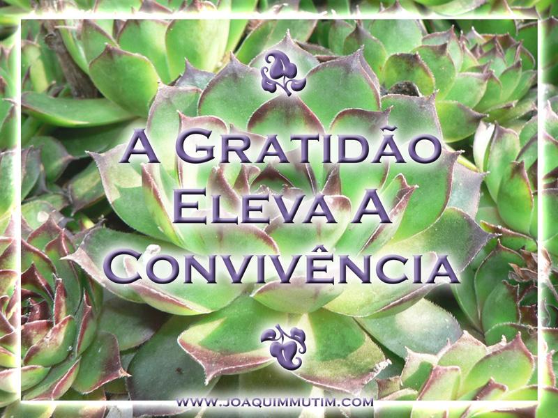 a gratidão eleva a convivência